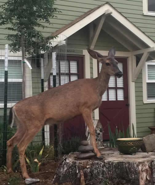 Deer Visit Wood Hamlet Ashland AirBnB