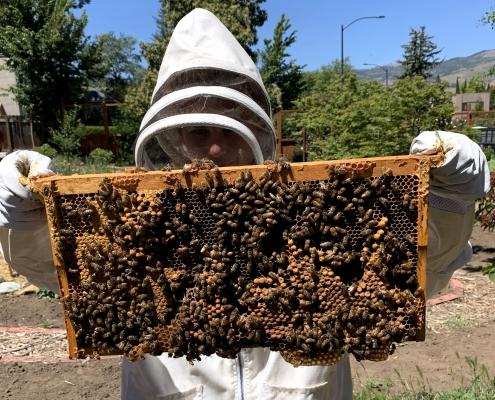 Wood Hamlet Honey Bees