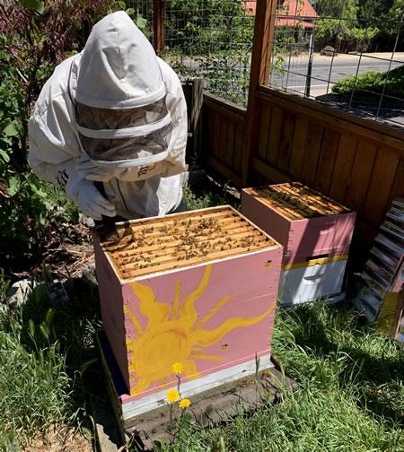 Natural Bee Keeping Wood Hamlet Ashland